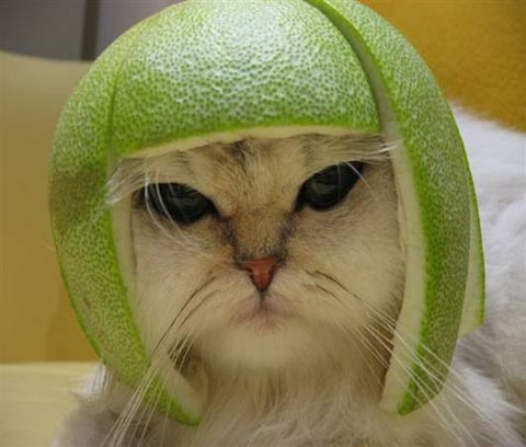 me-like-lime-hats....