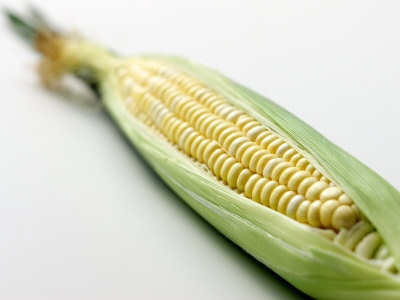 402150a-FB~An-Ear-of-Corn-Posters